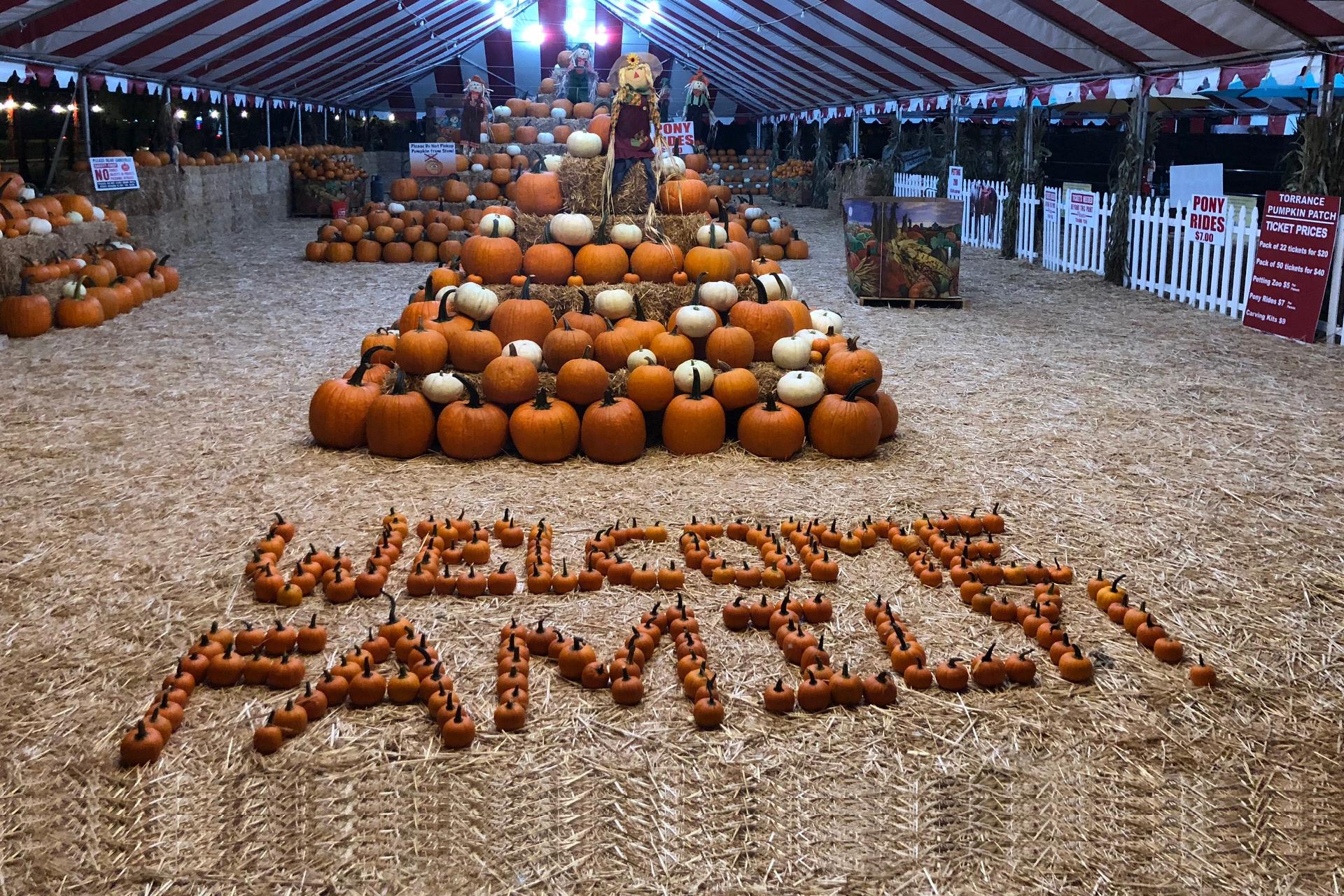 Pumpkin Patch Fun.org